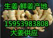 合肥小黄姜产地批发市场