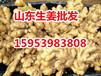 山东优质生姜多少钱一斤