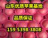 今年山东冷库红富士苹果批发价格预测