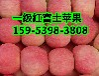 山西红富士苹果今日交易价格