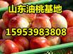 油桃批发价格福建油桃市场行情