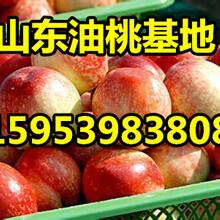 油桃批发价格福建油桃市场行情图片