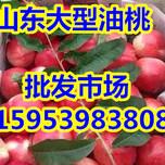 山东中油系列126油桃产地价格图片