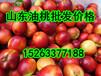 油桃价格山东油桃价格今日油桃批发价格行情