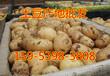 最新土豆价格行情山东土豆价格持续走低