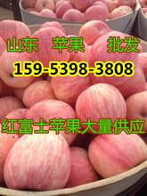 2017山东红星苹果价格今日价格