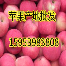 今日红露苹果价格图片