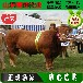 弥勒县肉牛价格;黄牛出栏价格