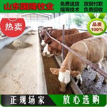 黄牛价格行情;8个月的肉牛犊什么价格;宁武县肉牛养殖场图片