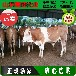 肉牛犊价格质量;肉牛犊养殖多大规模国家有补贴