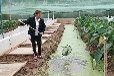 青蛙养殖怎么样农村青蛙养殖技术培训分享免费