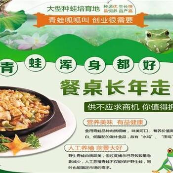 江苏泰通黑斑蛙养殖技术优势