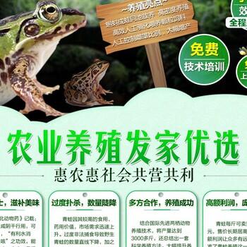 安徽淮北青蛙养殖技术分析黑斑蛙牛蛙养殖技术