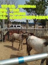 马勒山哪里有卖矮马的批发价格多少钱