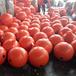 供应青岛水上浮球PE耐腐蚀塑料浮球航海警示浮球
