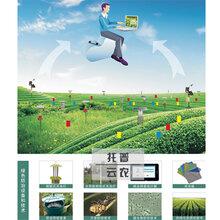 农林物联网对农林业的发展有什么作用呢?