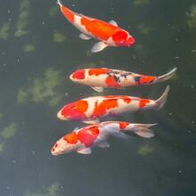 浦东新区鱼池过滤水质图片