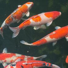 江苏鱼池水处理系统,鱼池清洗图片