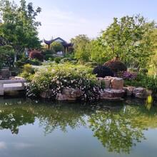 泰安鱼池过滤,鱼池水处理图片