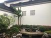 南京新中式园林设计