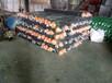 三针黑色遮阳网,绿色盖土网