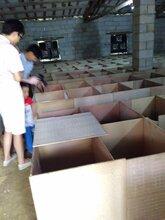 出售竹鼠种苗,商品鼠,包教技术,终身技术支持