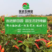 匡老五辣业21年干辣椒批发供应商图片