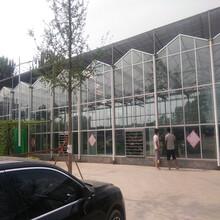 全国供应温室大棚生态餐厅玻璃温室大棚骨架图片