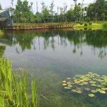 成都润池锦鲤鱼池护理的秋季注意事项