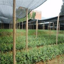 供应油茶树苗-宜春市天一轻基质育苗容器有限公司