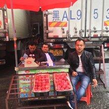 东莞满意水果代销公司电话;水果代销水果批发