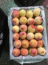 大型批發市場代銷水果代賣水果水果代銷