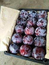 东莞下桥水果批发市场水果代销