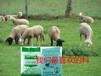 羊涨价了下一步该....