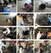 湖北粗筛喂料泵轴承室磨损在线修复