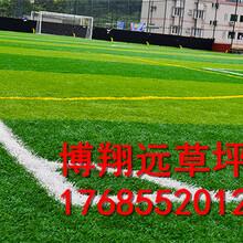 青岛专业足球场人工草坪生产厂子