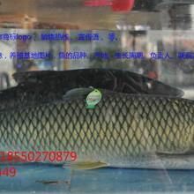 防伪二维码鱼吊牌生产厂家,二维码追溯鱼标签供应商图片
