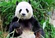 亚布力森林动物园一日游亚布力熊猫馆一日游