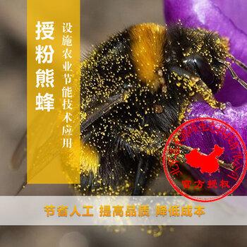 熊蜂主图1