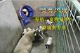 畜牧养殖降温水雾风机降温喷雾风机高档