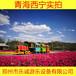 广场大型游乐设备古典无轨火车儿童电动玩具托马斯小火车