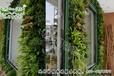 沈阳植物墙,生态墙,绿植墙,专业施工,生产厂家招商加盟