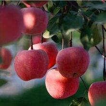 富硒苹果,富硒苹果营养液