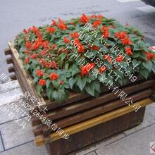 广西步行街热销花箱户外实木防腐厂家供应图片