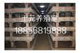 临泉土元养殖市场行情分析