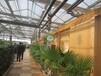 河南温室/大连温室/甘肃温室/连栋温室的类型