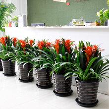西安花卉租賃銷售公司步步高花卉綠植銷售部