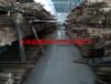 优质供应6米宽超宽幅度不锈钢网120目不锈钢宽幅宽度造纸网