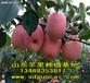 攀枝花水果批发市场红富士苹果批发价格