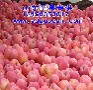 山东临沂苹果价格走势图片